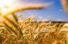 solutii agricultura ecologica