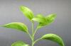 reglementari productie ecologica